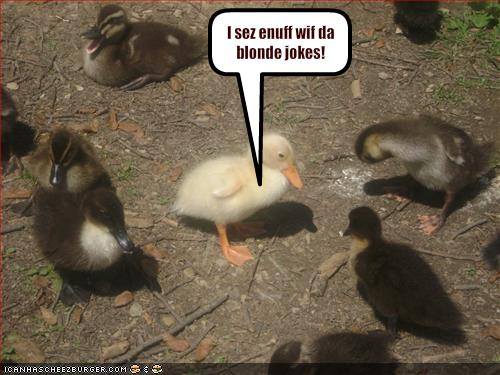 funny-pictures-duck-is-upset-about-blonde-jokes.jpg